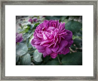 Pink Beauty Framed Print