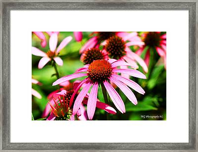 Pink Beauty Framed Print by Marty Gayler