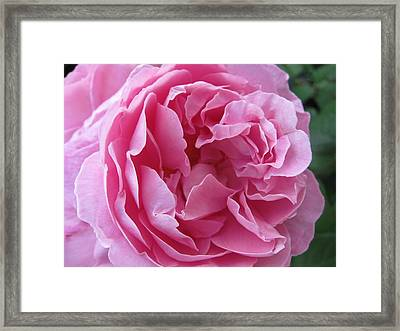 Framed Print featuring the photograph Pink Beauty by Pema Hou