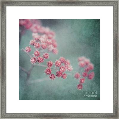 Pink Beauty Framed Print by Priska Wettstein