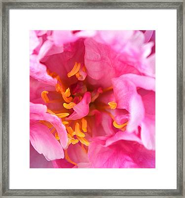 Pink Beauty Framed Print by Tine Nordbred