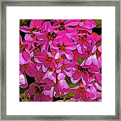 Pink Begonia In Park Sierra Near Coarsegold-california  Framed Print by Ruth Hager