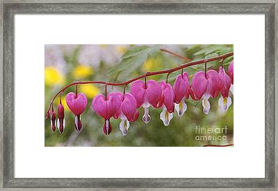 Pink Bleeding Hearts Framed Print