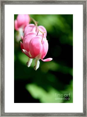 Pink Bleeding Hearts  Framed Print by Neal Eslinger