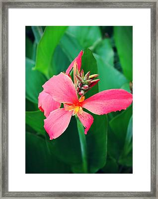 Pink Bloom Framed Print by Cathie Tyler