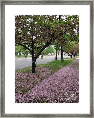 Framed Print featuring the photograph Pink Bloom  by Christina Verdgeline
