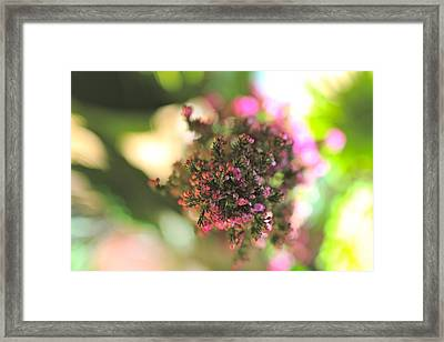 Pink Blossom Framed Print by Tracy Male