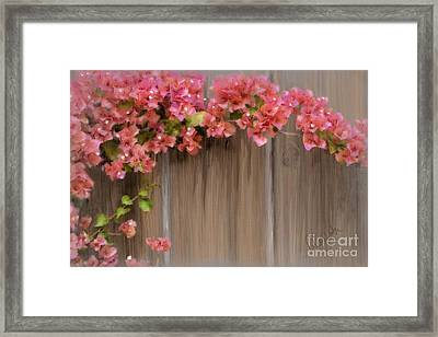 Pink Bougainvillea Framed Print by Andrea Auletta