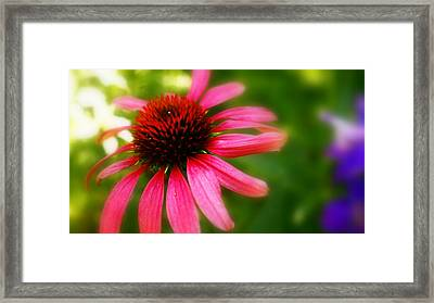 Pink Burst Of Color Framed Print by Alexandra  Rampolla
