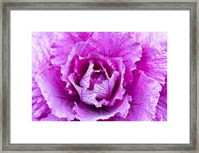 Framed Print featuring the photograph Pink Cabbage by Crystal Hoeveler