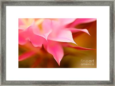 Pink Cactus Flower Abstract Framed Print by Michael Cinnamond