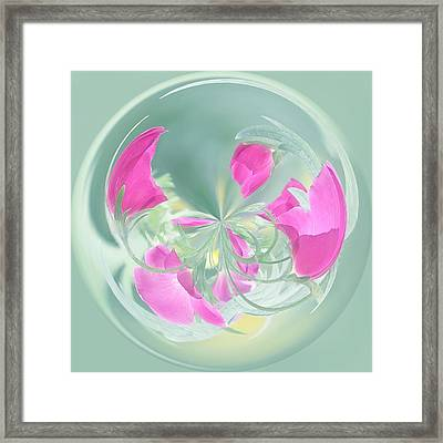 Pink California Poppy Orb Framed Print by Kim Hojnacki