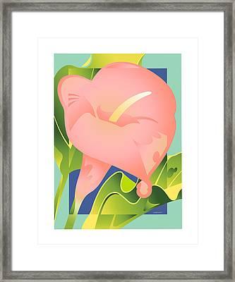 Pink Calla Framed Print