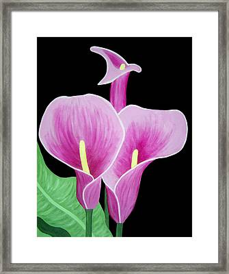 Pink Calla Lilies 1 Framed Print