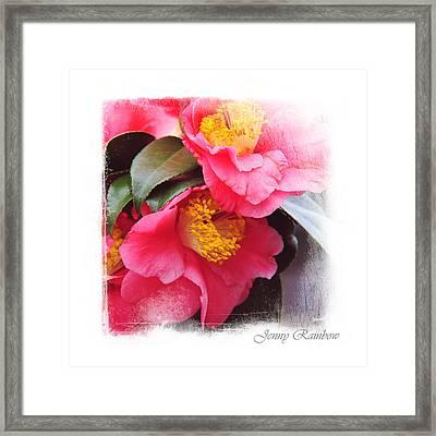 Pink Camellia. Elegant Knickknacks Framed Print by Jenny Rainbow