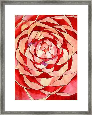 Pink Camellia Macro Framed Print by Sacha Grossel