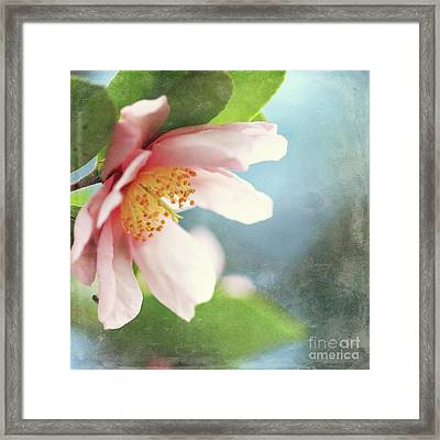 Pink Camellia Framed Print by Sylvia Cook