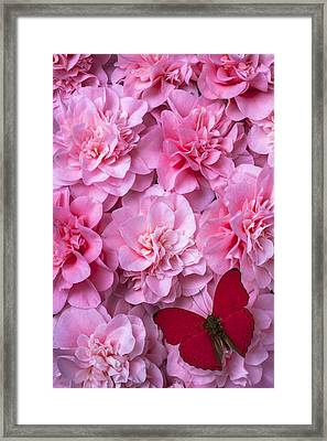 Pink Camilla's And Red Butterfly Framed Print by Garry Gay