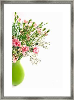 Pink Carnation Flowers Framed Print