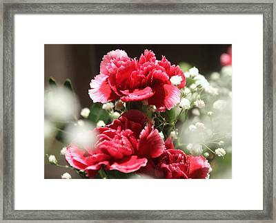 Pink Carnations Framed Print by Rebecca Davis