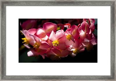 Pink Cascade Framed Print by David Patterson