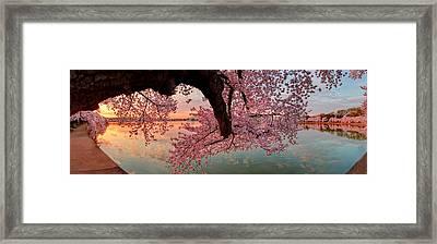 Pink Cherry Blossom Sunrise Framed Print