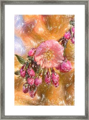 Pink Cherry Blossoms Framed Print by MotionAge Designs