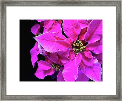 Framed Print featuring the photograph Pink Christmas by Charles Lupica