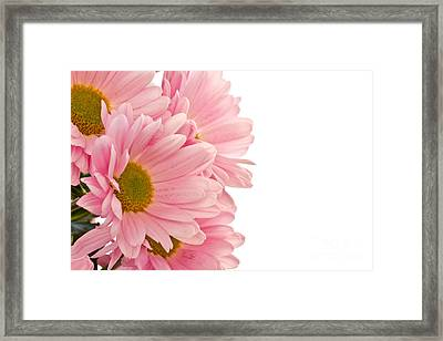 Pink Chrysanthemums Framed Print by Boon Mee
