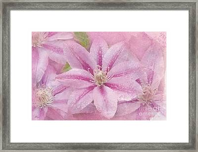 Pink Clematis Profusion Framed Print by Betty LaRue