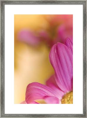 Pink Close Up Framed Print