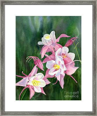 Pink Columbine Blossoms Framed Print by Sharon Freeman