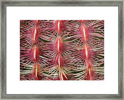 Pink Comb Cactus Framed Print by Nigel Downer