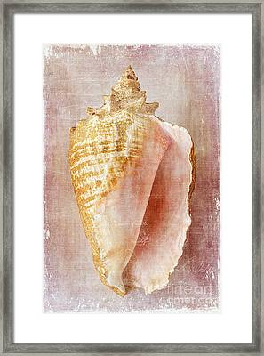 Pink Conch Framed Print
