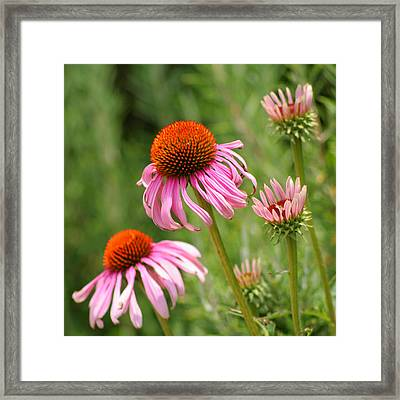 Pink Cone Flower Framed Print by Art Block Collections