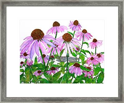Pink Cone Flowers And Dragonfly Framed Print