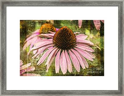 Framed Print featuring the photograph Pink Coneflower by Vicki DeVico