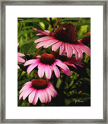 Framed Print featuring the photograph Pink Coneflowers by James C Thomas