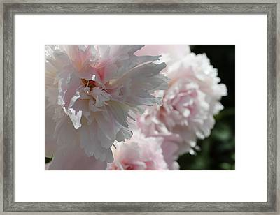 Pink Confection Framed Print by Ruth Kamenev