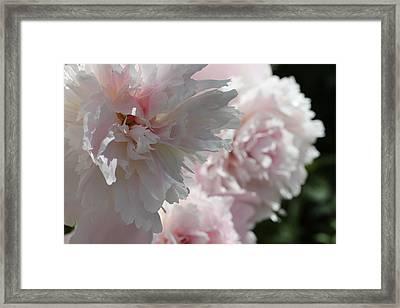 Pink Confection Framed Print