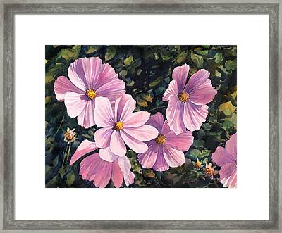 Pink Cosmos Framed Print by Anthony Forster