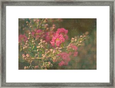 Pink Crepe Myrtle Framed Print by Suzanne Powers