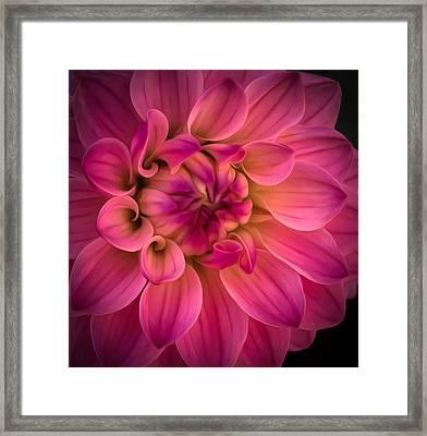 Pink Dahlia Framed Print by Linda Villers