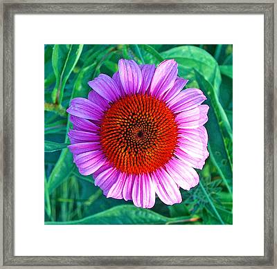 Pink Daisy By Jan Marvin Framed Print