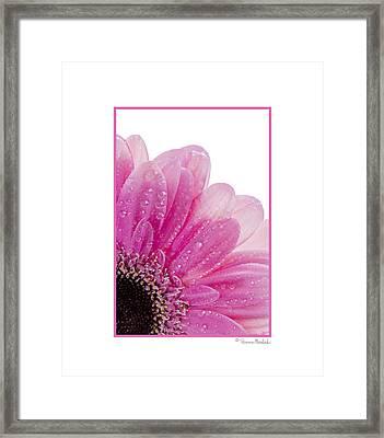 Pink Daisy Petals Framed Print