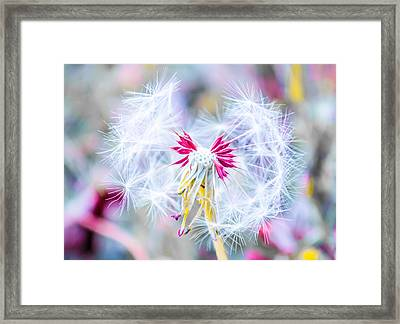 Magic In Pink Framed Print