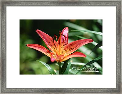 Framed Print featuring the photograph Pink Day Lily 20120614_41a by Tina Hopkins