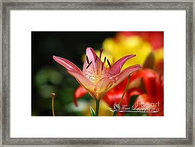 Framed Print featuring the photograph Pink Day Lily 20120614_47a by Tina Hopkins