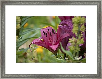 Framed Print featuring the photograph Pink Day Lily 20120618_42a by Tina Hopkins