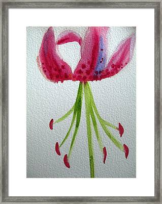 Pink Day Lily Framed Print by Sacha Grossel